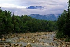 Été dans la forêt Image libre de droits