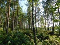 Été dans la forêt Photo stock