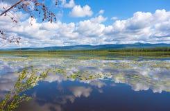 Été dans le Yukon image stock