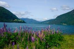 Été dans les fjords de la Norvège photos libres de droits