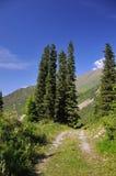 Été dans les montagnes et les fourrure-arbres Images libres de droits