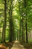 été de chemin forestier photographie stock libre de droits