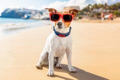 Été de chien photographie stock libre de droits