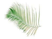 Été de concept avec la palmette verte de tropical fronde florale image stock
