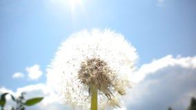 été de fleur Image libre de droits