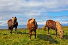 été de l'Islande Photographie stock