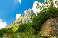 Été de montagne Jour ensoleillé Forêt et pré verts Images stock