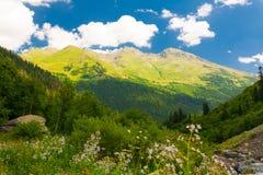 Été de montagne Jour ensoleillé Forêt et pré verts Image stock