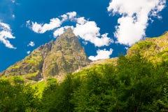 Été de montagne Jour ensoleillé Forêt et pré verts Images libres de droits