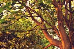Été de nature d'arbres de ressort d'automne Photographie stock libre de droits