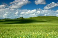 Été de prairie Images libres de droits