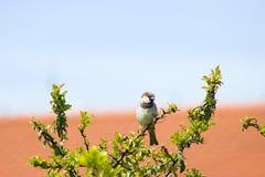 Été de Rhodos Grèce de nature animale d'oiseau Image stock