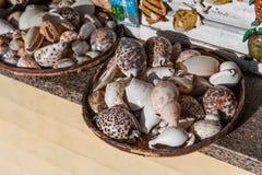 Été de souvenirs de mollusques et crustacés Images libres de droits