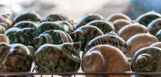 Été de souvenirs de mollusques et crustacés Photos libres de droits