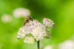 Été en fleur Photo libre de droits