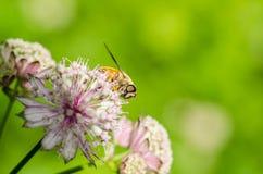 Été en fleur Photos libres de droits