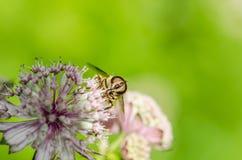 Été en fleur Image stock