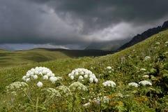 Été en montagnes Caucase Photos libres de droits