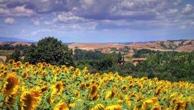 Été en Toscane, Italie images libres de droits