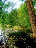 Été et l'arbre au lac image stock