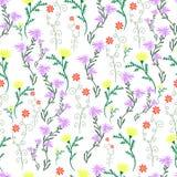 Été, fleurs sensibles et sauvages, couleur en pastel, PA sans couture florale Photographie stock libre de droits