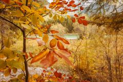Été indien de la Saint-Martin au lac Plansee images stock