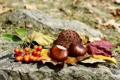 Été indien de la Saint-Martin - automne Image libre de droits