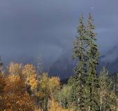 Été indien de la Saint-Martin dans le Colorado Image stock