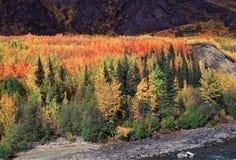 Été indien de la Saint-Martin en Colombie-Britannique, rivière de Stikine - arbres colorés photos libres de droits