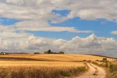 Été : paysage rural Entre la Puglia et Basilicate : collines avec des champs de maïs et des fermes l'Italie Images stock