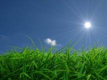 Été Sun images libres de droits