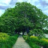 Été vert de sommer de chemin d'arbre image libre de droits