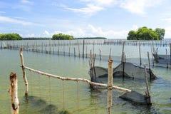Établissement d'incubation de fruits de mer Photos libres de droits