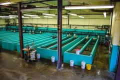 Établissement d'incubation de poissons Images stock