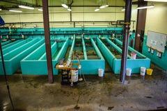 Établissement d'incubation de poissons Photos stock