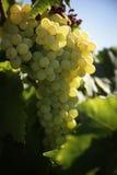 Établissement vinicole Images libres de droits