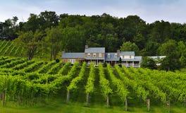 Établissement vinicole