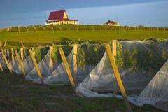 Établissement vinicole au coucher du soleil photo stock