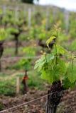 Établissement vinicole autour de Bordeuax Photos libres de droits