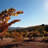 Établissement vinicole d'automne Photo stock