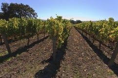 Établissement vinicole de la Californie, vallée de Santa Ynez photographie stock libre de droits