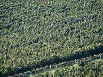 Établissement vinicole de prince Stirbey, Roumanie Images stock