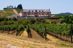 Établissement vinicole en été Photos libres de droits