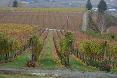 Établissement vinicole en automne Photographie stock