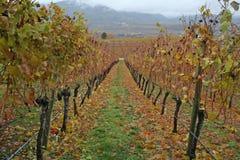 Établissement vinicole en automne Image stock