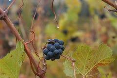Établissement vinicole en automne Photographie stock libre de droits