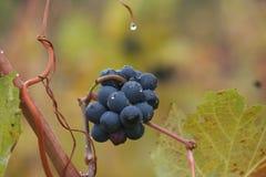 Établissement vinicole en automne Photos libres de droits
