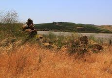 Établissement vinicole et herbe de Napa de rouge Photo libre de droits