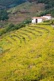 Établissement vinicole et vignobles dans un Cova Photographie stock libre de droits
