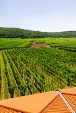 Établissement vinicole et vignobles en Croatie Katinar, l'île de Krk perspective image libre de droits